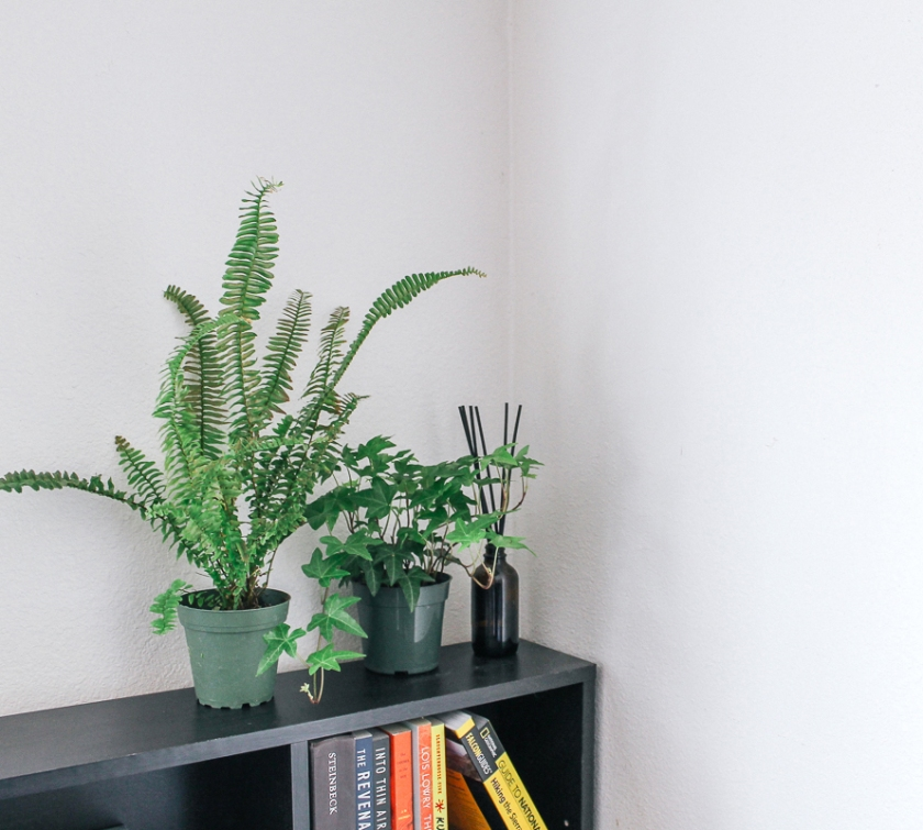 Houseplants on a bookcase