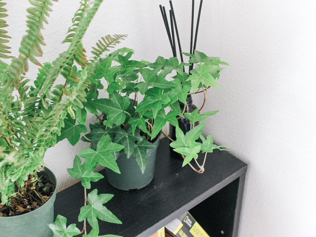 eco-friendly-houseplant-home-space