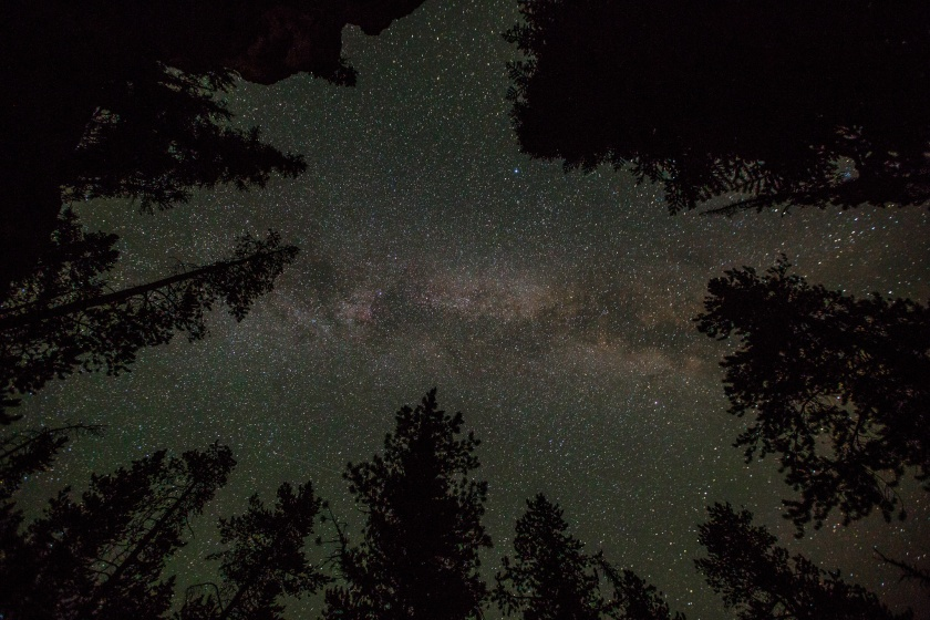 Milky Way and lodgepole pines; photo by Neal Herbert