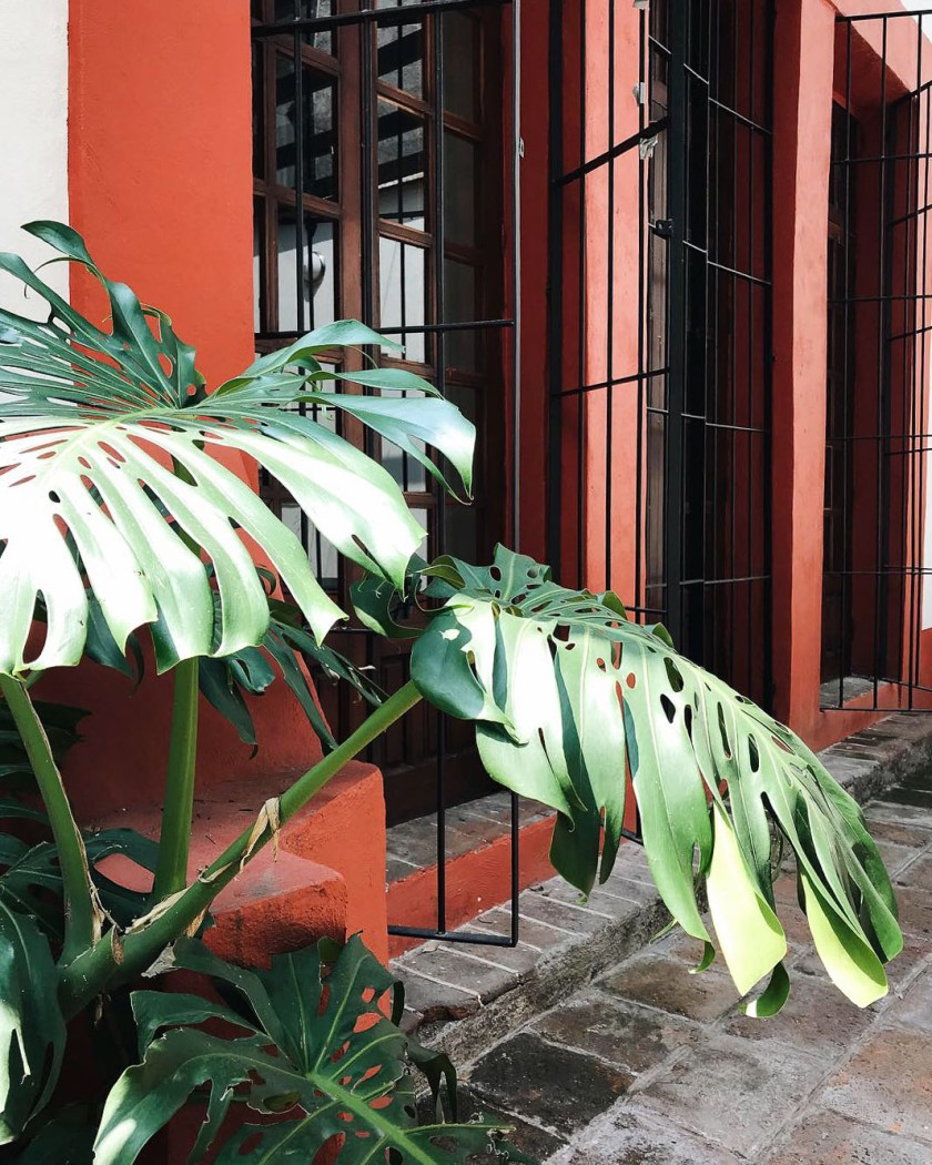 plants in Mexico City
