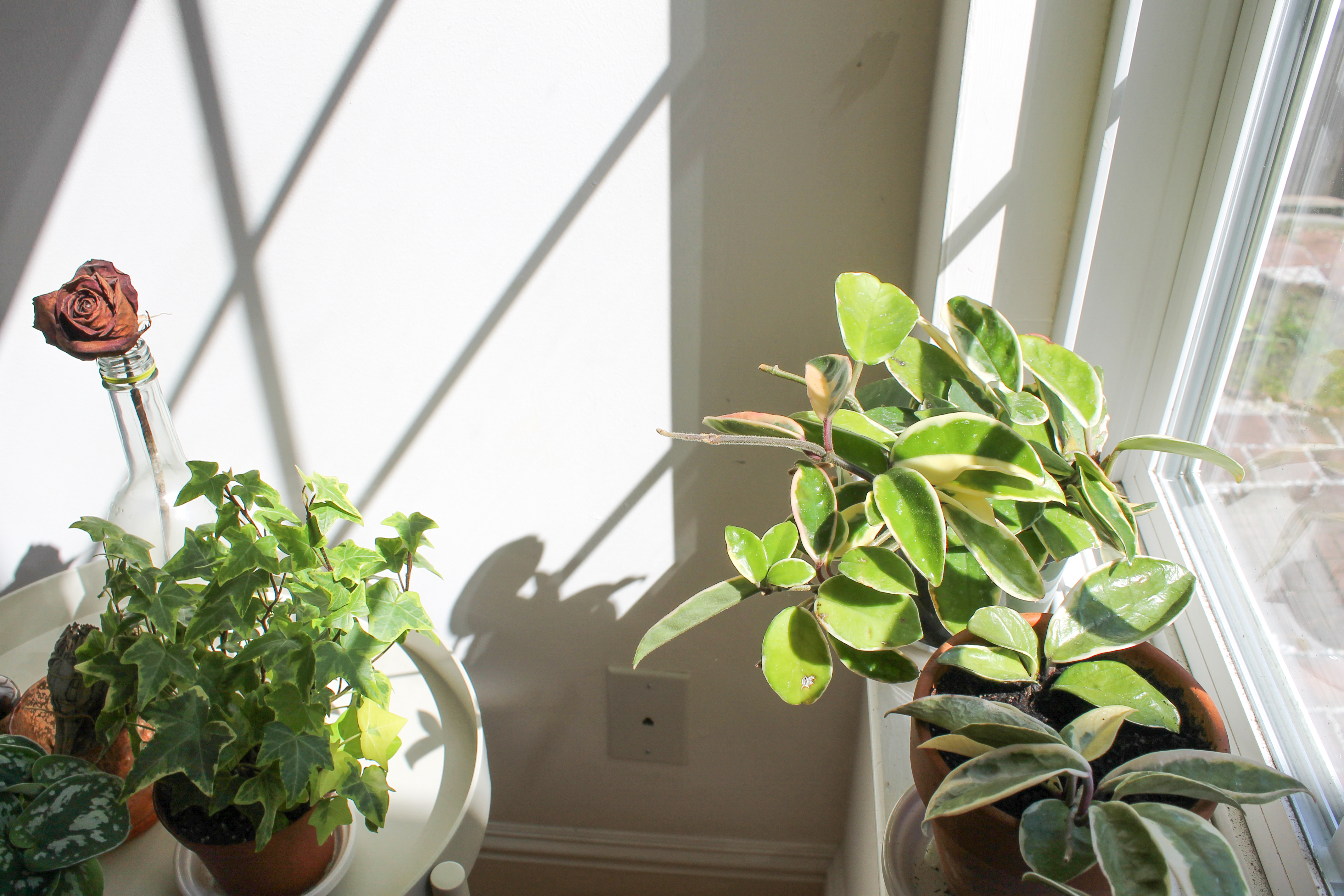 house plants - sustainable living