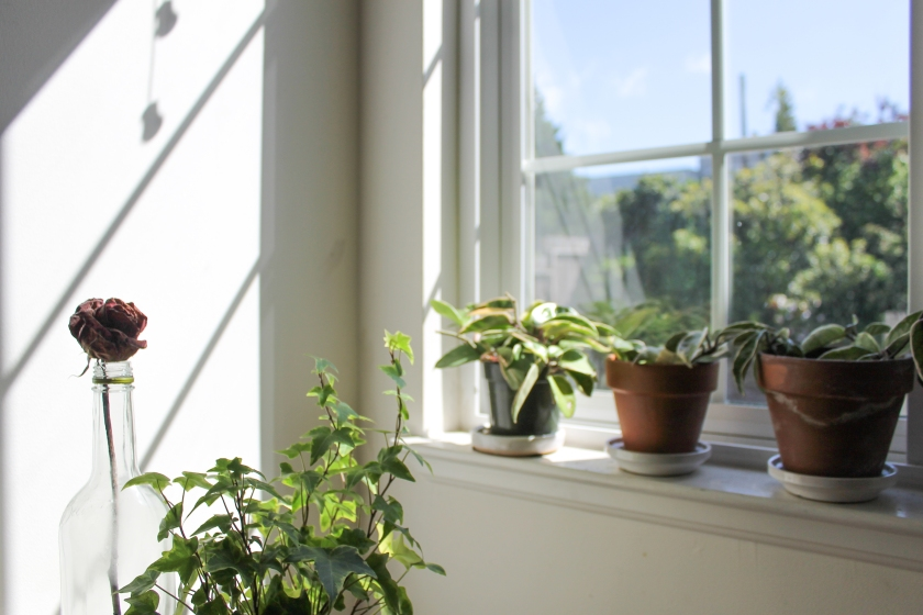 plants by the window - sustainable living